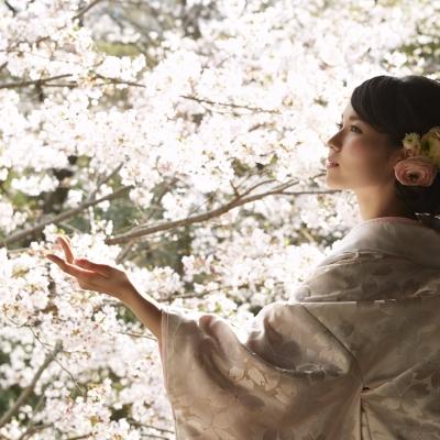 陣屋の桜をバックにフォトウェディング